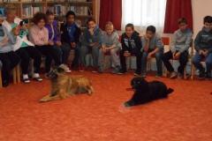 010_kutyak