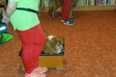 076_kutyak